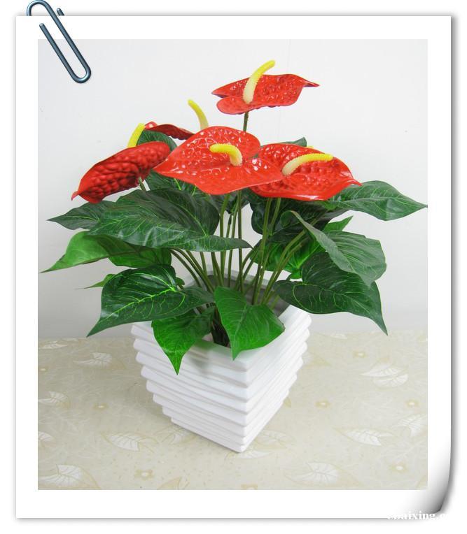 镇宁路长宁区镇宁路绿植花卉植物租赁植物租摆养护室内