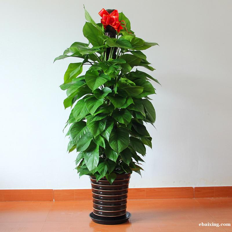 黄浦区人民广场花卉绿植植物租赁植物租摆养护黄浦区