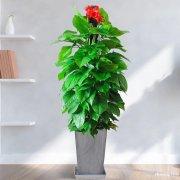 长宁区花卉植物租赁长宁区绿植植物租赁租摆养护