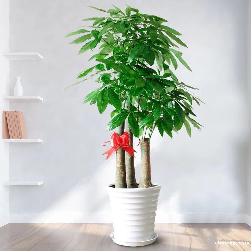 新闸路南京西路人民广场长寿路花卉绿植植物租摆植物租赁