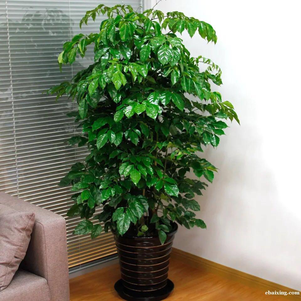 上海浦东新区绿色盆栽租赁公司哪家好花卉植物租赁绿植植物租摆浦