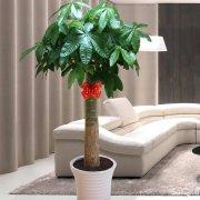 复兴中路西藏南路河南南路盆栽花卉绿植植物租摆租赁上海养护绿化
