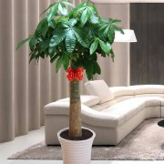 凌云路漕溪北路徐家汇上海市徐家汇室内养护绿植花卉植物租摆植物
