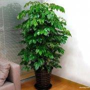 卢湾区绿植植物植物租摆植物租赁卢湾区花卉绿植租摆租赁