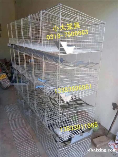 兔子笼鸽子笼鸡笼狐狸笼鹌鹑笼运输笼鸟笼狗笼兔笼鸽笼貉笼鹧鸪笼